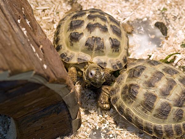 Criceti conigli tartarughe pesci e piccoli animali for Tartarughe vaschetta