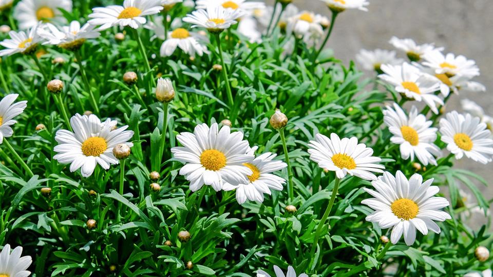 Sementi fiori stagionali da interno ed esterno per il tuo for Fiori in giardino
