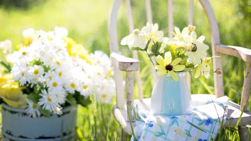 Sementi fiori stagionali da interno ed esterno per il tuo for Vendita piante e fiori da giardino
