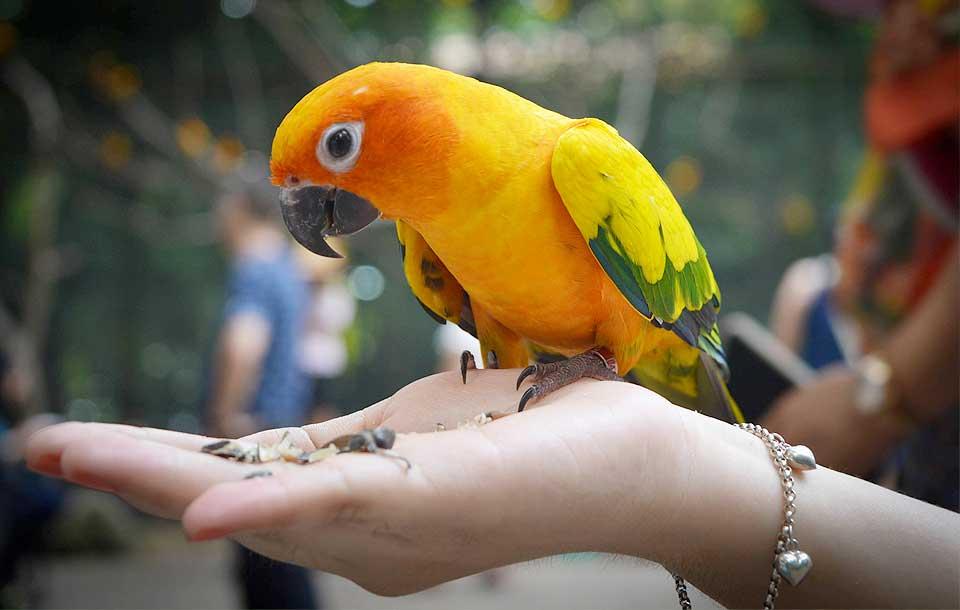 Alimenti per uccelli inseparabili cocorite pappagalli - Vitamine per cocorite ...