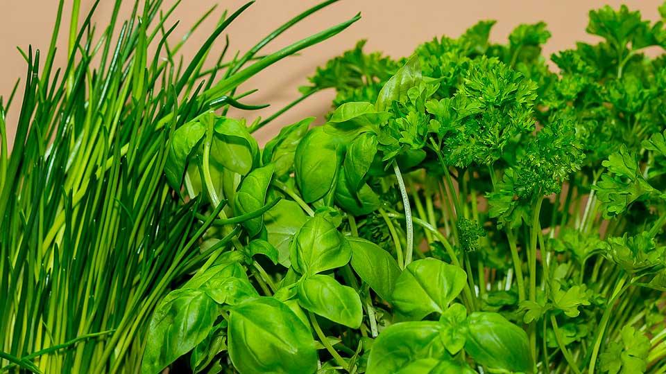 Piante aromatiche e piante medicinali per orto, balcone, giardino
