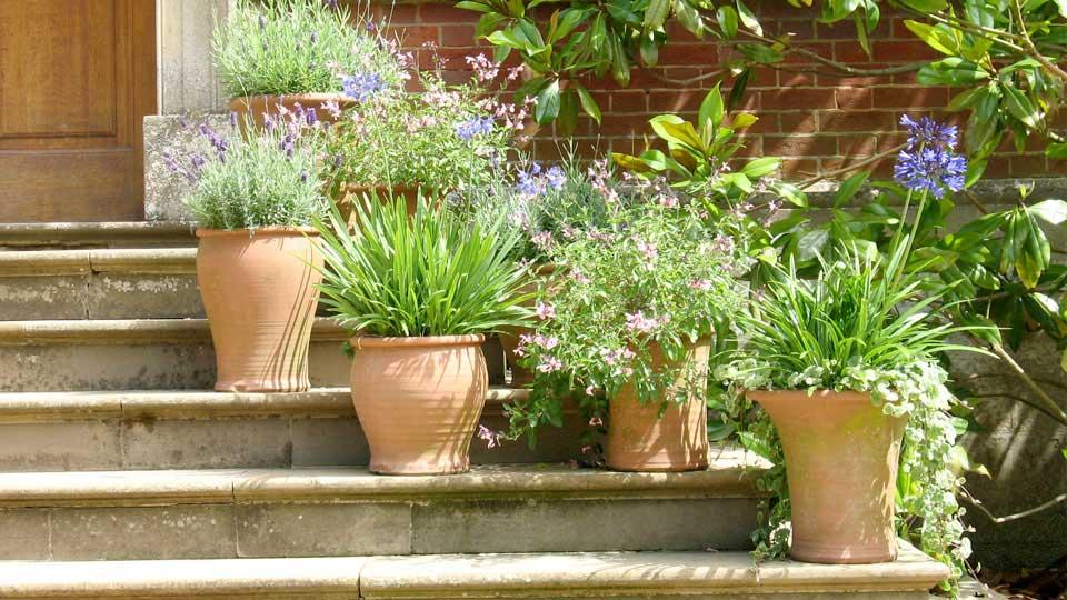 Sementi fiori stagionali da interno ed esterno per il tuo - Piante per il giardino ...